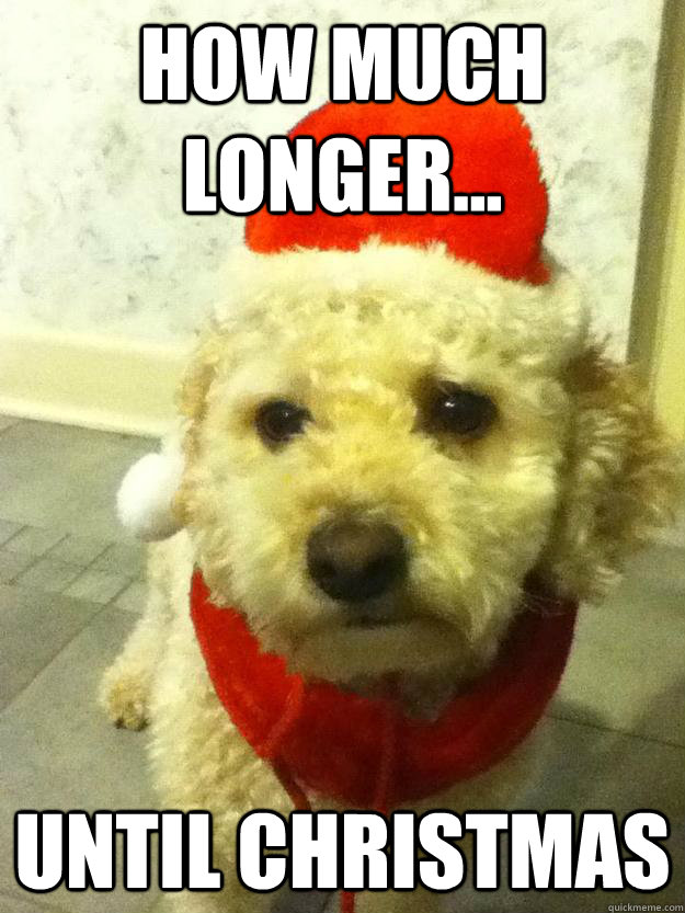 How much longer... until christmas - Molly Dog - quickmeme