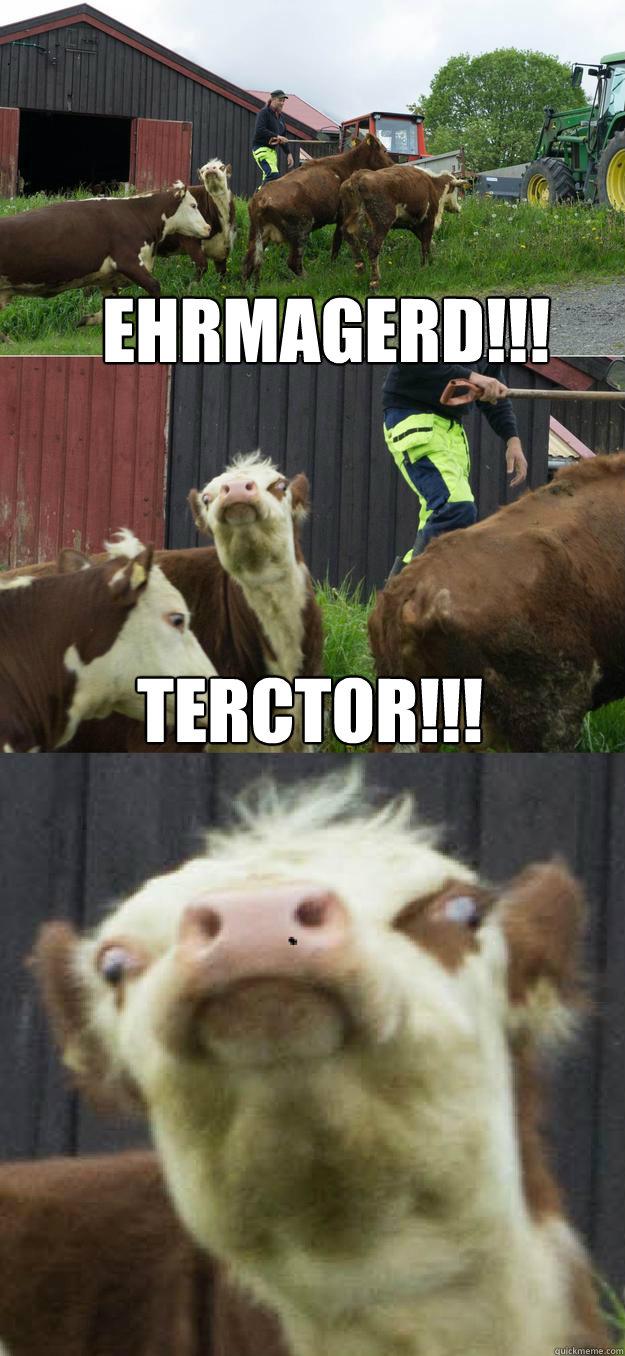 EHRMAGERD!!! TERCTOR!!!