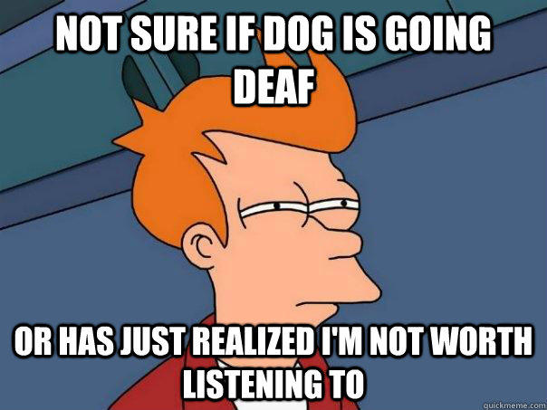 Not sure if dog is going deaf Or has just realized I'm not worth listening to - Not sure if dog is going deaf Or has just realized I'm not worth listening to  Futurama Fry