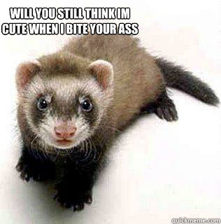 will you still think Im cute when I bite your ass - will you still think Im cute when I bite your ass  Logical Fallacy Ferret
