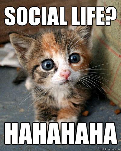 social life? hahahaha  Thesis Kitten