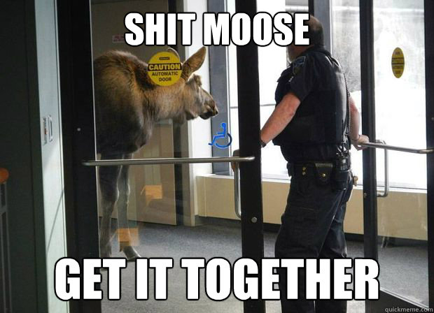 Shit moose get it together - Shit moose get it together  Misc