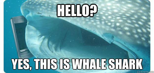 HELLO? YES, THIS IS WHALE SHARK  WHALESHARK
