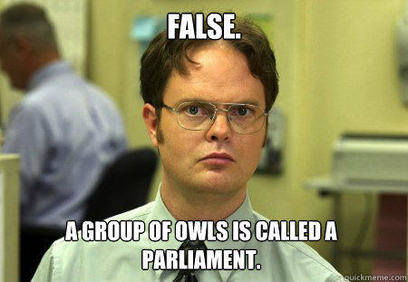 false. a group of owls is called a parliament. - false. a group of owls is called a parliament.  Dwight