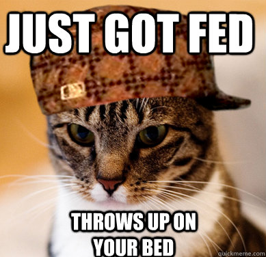 Just got fed throws up on your bed - Just got fed throws up on your bed  Scumbag Cat