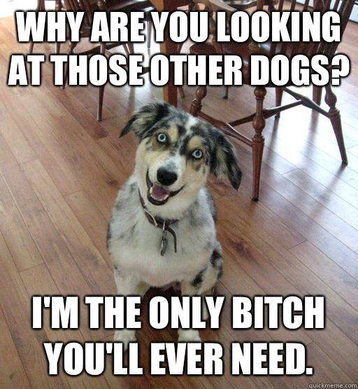 Why are you looking at those other dogs? I'm the only bitch you'll ever need. - Why are you looking at those other dogs? I'm the only bitch you'll ever need.  Overly Attached Dog
