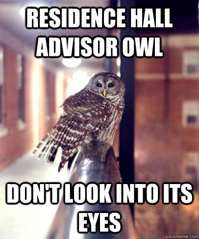 Residence Hall Advisor Owl Don't look into its eyes