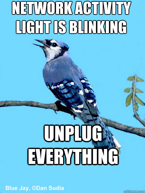 NETWORK ACTIVITY LIGHT IS BLINKING  UNPLUG EVERYTHING - NETWORK ACTIVITY LIGHT IS BLINKING  UNPLUG EVERYTHING  Blue Team Bird