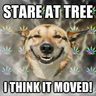 Stoner Dog Memes  Imgflip