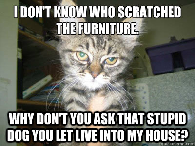 I don't know who scratched the furniture. Why don't you ask that stupid dog you let live into my house?