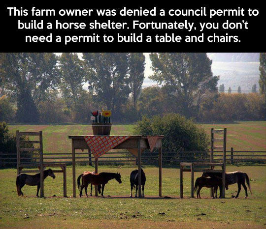 One very clever farmer… -   Misc