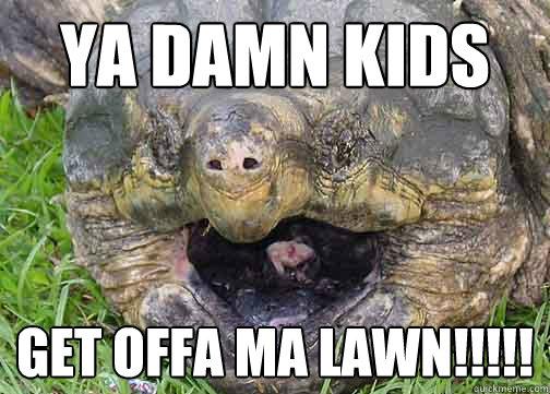 Flying turtle meme - photo#10