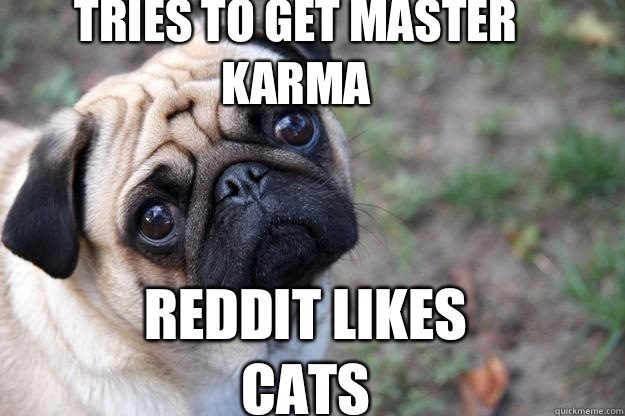 tries to get master karma Reddit likes cats  First World Dog problems