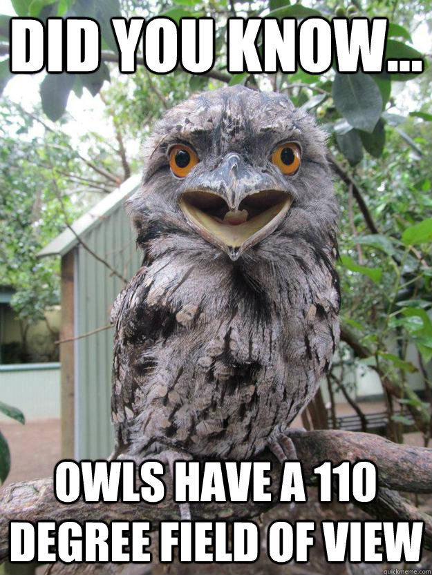 Did you know... Owls have a 110 degree field of view - Did you know... Owls have a 110 degree field of view  Annoying Fact Owl