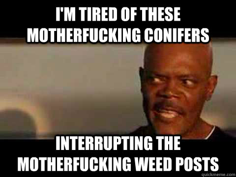 i'm tired of these motherfucking conifers interrupting the motherfucking weed posts - i'm tired of these motherfucking conifers interrupting the motherfucking weed posts  Samuel L Jackson