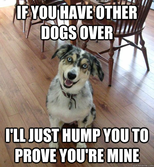 If you have other dogs over I'll just hump you to prove you're mine - If you have other dogs over I'll just hump you to prove you're mine  Overly Attached Dog
