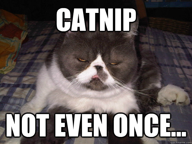 Catnip Not even once...