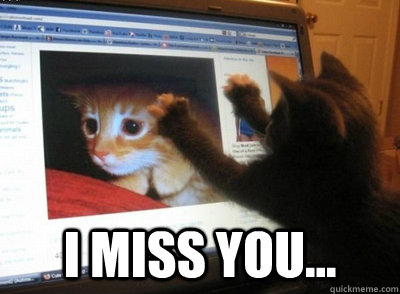 8755526e994c1daece67301b7b95d59d4359ac70a9739b3c29983c4e494e5dd0 i miss you long distance relationship cat quickmeme