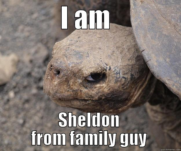 I AM  SHELDON FROM FAMILY GUY Angry Turtle
