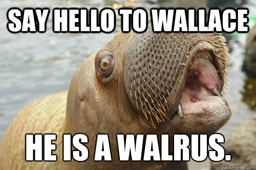 Funny Meme To Say Hello : Fuck yeah!!!! wallace the walrus quickmeme