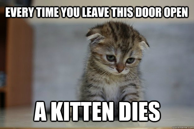 Every time you leave this door open a kitten dies  Sad Kitten