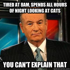 tired at 8am, spends all hours of night looking at cats You can't explain that - tired at 8am, spends all hours of night looking at cats You can't explain that  Bill O Reilly