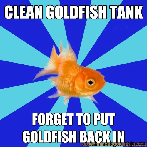 clean goldfish tank forget to put goldfish back in - clean goldfish tank forget to put goldfish back in  Absentminded Goldfish