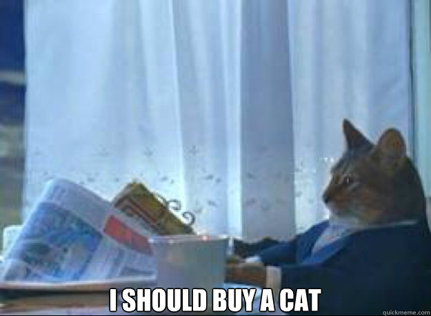 I should buy a cat  - I should buy a cat   I should buy a boat cat