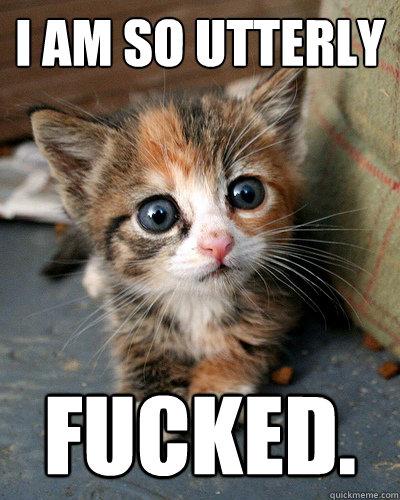 I am so utterly Fucked.  Thesis Kitten