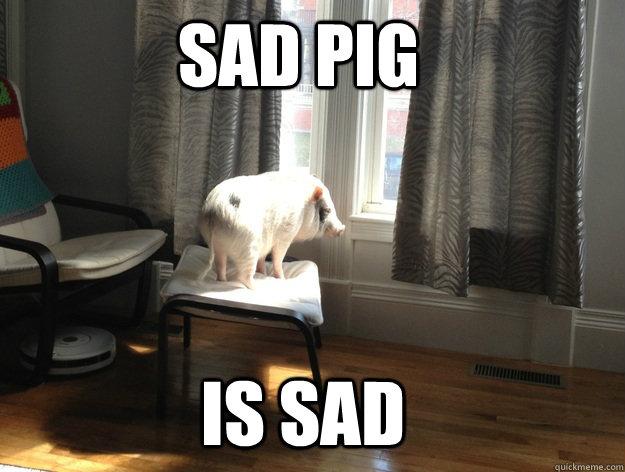sad pig is sad