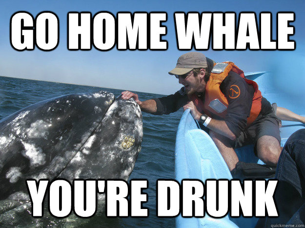GO HOME WHALE YOU'RE DRUNK - GO HOME WHALE YOU'RE DRUNK  Misc
