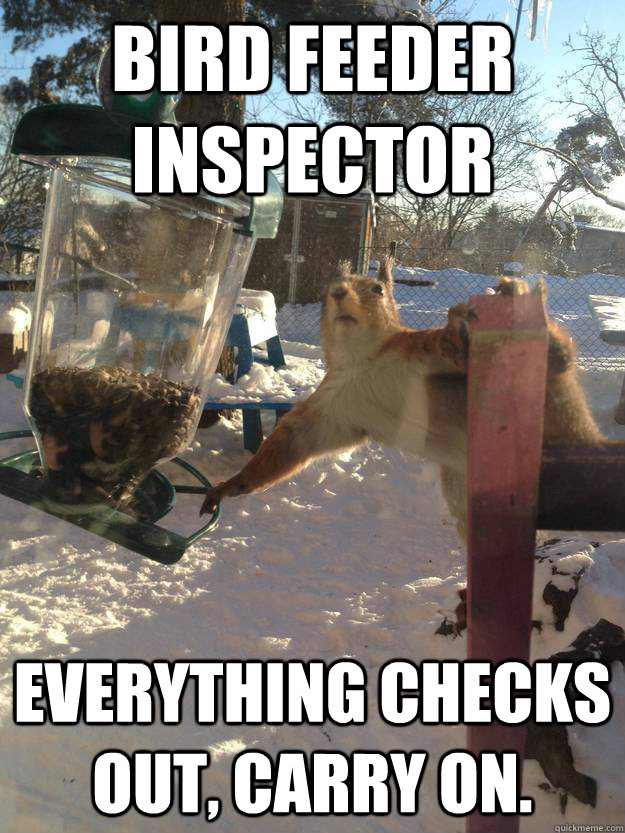 88d3ed5a8d0cc29bb723aed4b99c6bc5536e2f8ca2d0ac27c8b3ed173998a0eb bird feeder inspector everything checks out, carry on sneaky