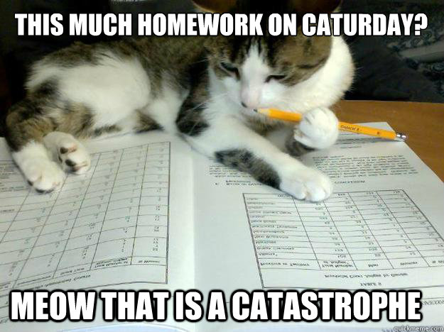 This much homework on caturday? meow that is a catastrophe