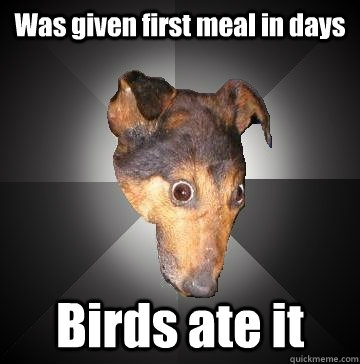 Was given first meal in days Birds ate it - Was given first meal in days Birds ate it  Depression Dog