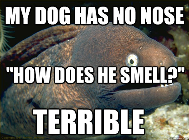 My dog has no nose