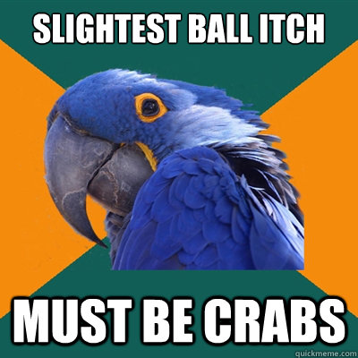 Slightest ball itch must be crabs - Slightest ball itch must be crabs  Paranoid Parrot