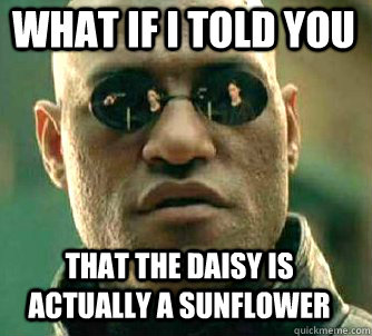 what if i told you That the daisy is actually a sunflower - what if i told you That the daisy is actually a sunflower  Matrix Morpheus