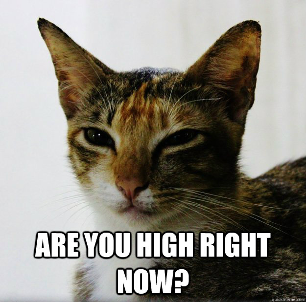 Are You High Right Now 420 Cat Quickmeme