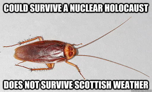 Could survive a Nuclear holocaust Does not survive Scottish Weather - Could survive a Nuclear holocaust Does not survive Scottish Weather  Cockroach in Scotland