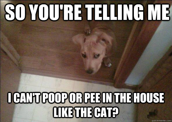 So you're telling me  i can't poop or pee in the house like the cat? - So you're telling me  i can't poop or pee in the house like the cat?  Skeptical Dog