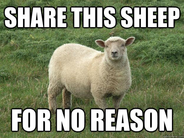 SHARE THIS SHEEP FOR NO REASON