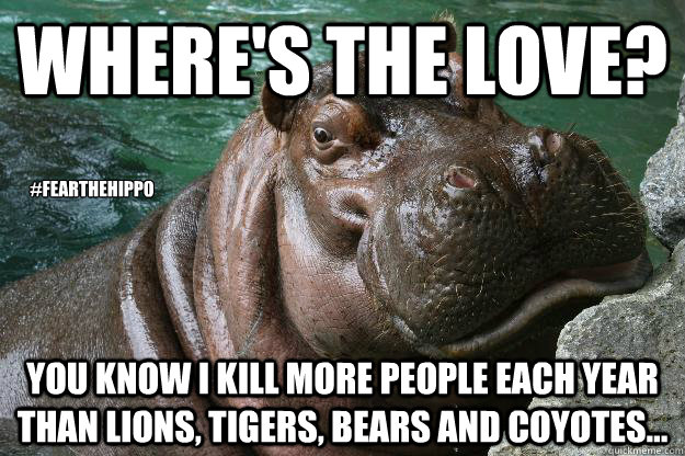 Where's the Love? You know I kill more people each year than lions, tigers, bears and coyotes...  #FeartheHippo  Hungry Hippo