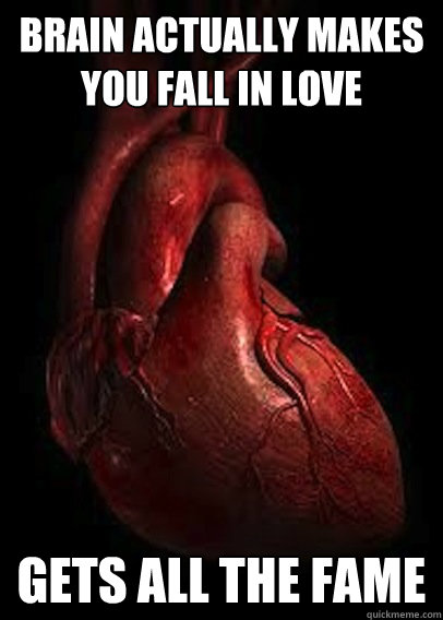 brain actually makes you fall in love gets all the fame