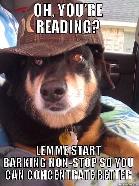 OH, YOU'RE READING? LEMME START BARKING NON-STOP SO YOU CAN CONCENTRATE BETTER Scumbag dog