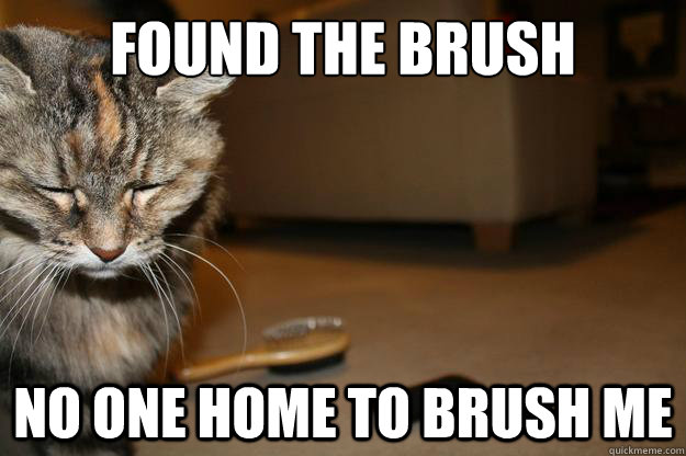 Found the brush no one home to brush me - Found the brush no one home to brush me  First World Cat Problems