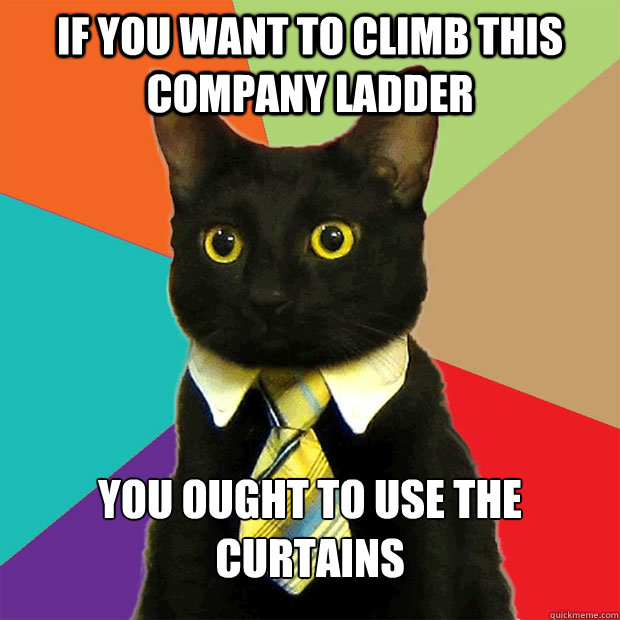 If you want to climb this company ladder you ought to use the curtains  - If you want to climb this company ladder you ought to use the curtains   Business Cat
