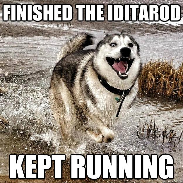 finished the iditarod kept running - finished the iditarod kept running  Happiest Dog In The World