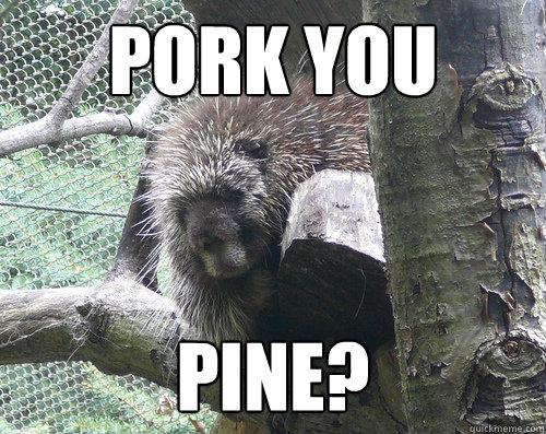 pork you pine?  Post break up porcupine