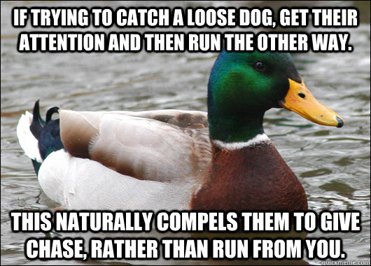 If trying to catch a loose dog, get their attention and then run the other way. This naturally compels them to give chase, rather than run from you. - If trying to catch a loose dog, get their attention and then run the other way. This naturally compels them to give chase, rather than run from you.  Actual Advice Mallard