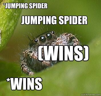 8ac2691e3eb005ab64e6c99f5920fc9fde6538eb49559e56b770a1de2103e8b7 jumping spider (wins) jumping spider *wins misunderstood spider,Misunderstood Spider Meme